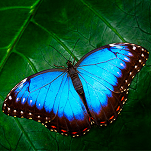 Costa-Rica-Wellness-Tour-Butterfly